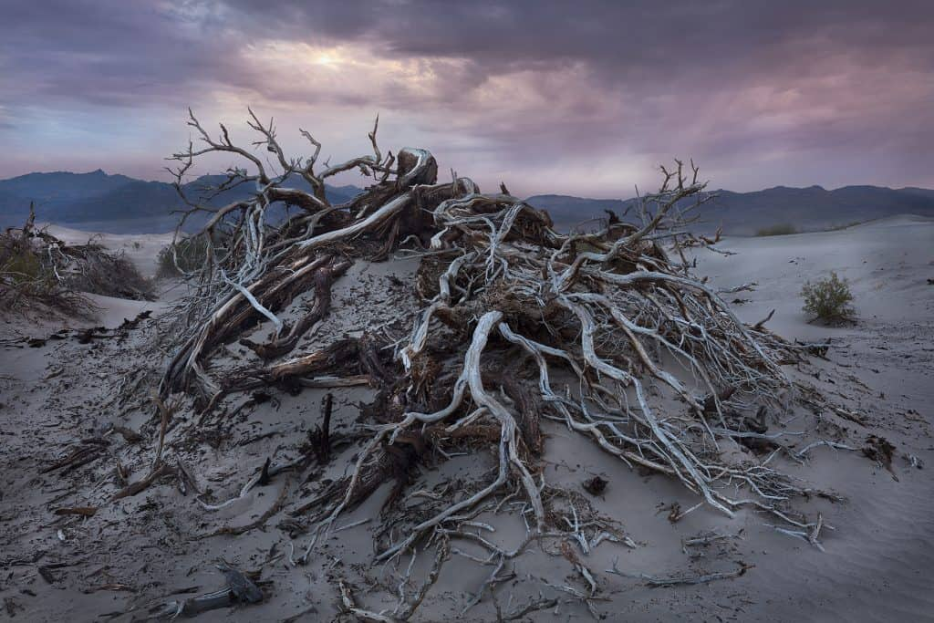Photography of gnarled roots of a mesquite tree in Mesquite Flat, Death Valley National Park taken by Sioux Falls SD based landscape photographer Paul Heckel.