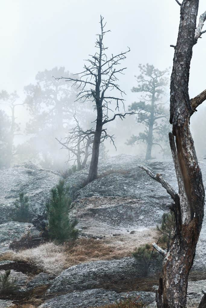 Norbeck Overlook Black Hills National Forest South DakotaTree In Fog Photographed By Heckel Photography