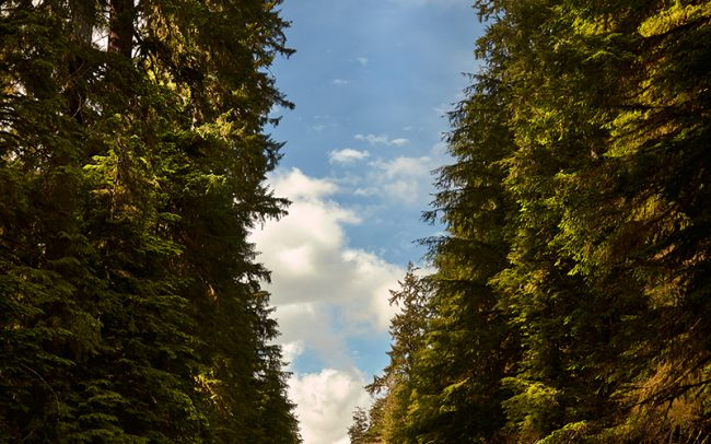 Photo of Highway 101 in Washington State with tree tunnel by Sioux Falls based landscape photographer Paul Heckel